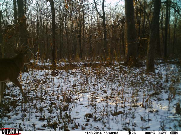 Western Kentucky Whitetails